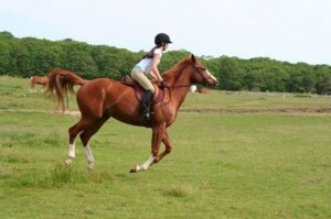 Horse-Riding-Sport