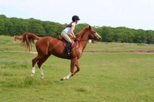Horse-Riding-Sport