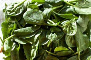 Spinach-Green-Smoothie-018
