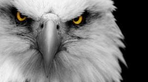 eagle_face