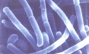 3_Acidophilus