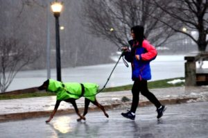 berea-runner-dog-in-rain-e54f5d7d489ad880